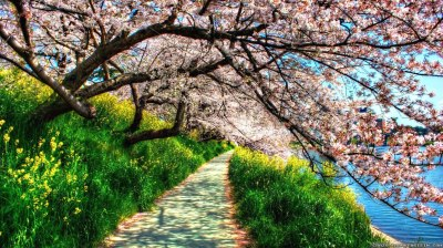 22+ Spring Nature Wallpapers, Backgrounds, Images | FreeCreatives
