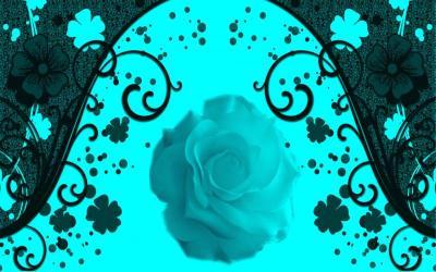 HD Aqua Rose Framed Wallpaper | Download Free - 83252