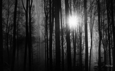 HD Light Into The Woods Wallpaper | Download Free - 73731