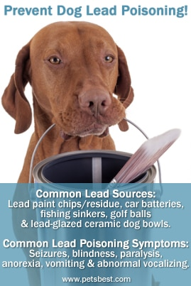 Lead Poisoning in Dogs and Cats