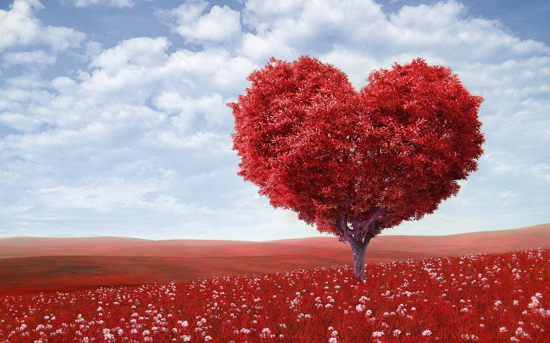 Love Wallpapers · Pexels · Free Stock Photos