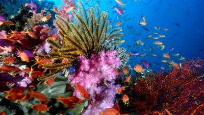 76 Sea Life HD Wallpapers   Background Images - Wallpaper Abyss