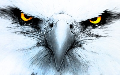 340 Eagle HD Wallpapers | Background Images - Wallpaper Abyss
