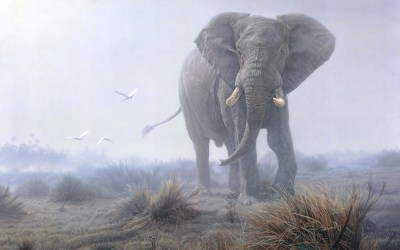 Elephant HD Wallpaper | Background Image | 1920x1200 | ID:314509 - Wallpaper Abyss