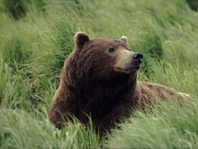 Bears! images Bear Wallpaper HD wallpaper and background ...