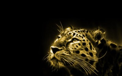 Leopard Full HD Wallpaper and Background Image | 1920x1200 | ID:394950