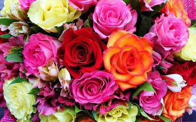 Colorful Roses HD Wallpaper | Background Image | 2100x1312 | ID:765623 - Wallpaper Abyss