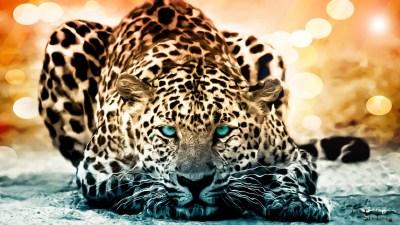 192 Jaguar HD Wallpapers   Backgrounds - Wallpaper Abyss