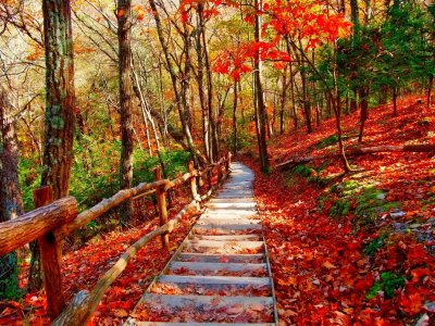 Autumn Forest Path HD Wallpaper | Background Image | 2048x1536 | ID:787141 - Wallpaper Abyss