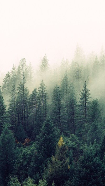 Nature-Mist-Forests-Trees-iPhone-Wallpaper - iPhone Wallpapers
