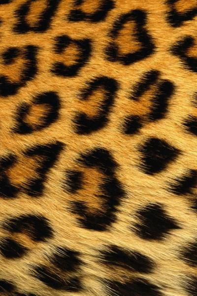 Beautiful Leopard Print iPhone 4 Wallpaper Wallpaper HD iPhone 4 and 4s