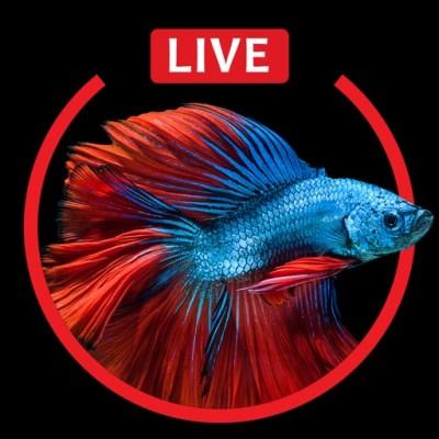 Aquarium Live HD Wallpapers for iphone 6s & 6s Plus par Fexy Apps