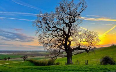 Magnifique arbre HD - 10 000 Fonds d'écran HD gratuits et de qualité ! Wallpapers HD