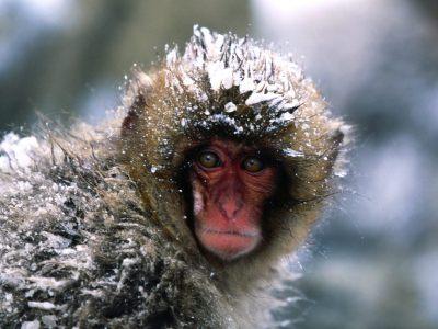 October 22, 2011: Dinners, projects, and Snow Monkeys ...