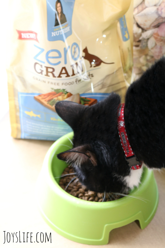 Domino Tries Out Rachael Ray Nutrish #NutrishZeroGrain #sponsored