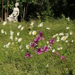 Wildflowers « Sorta Like Suburbia