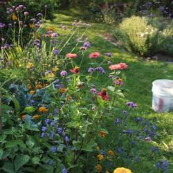 Chrysanthemums « Sorta Like Suburbia