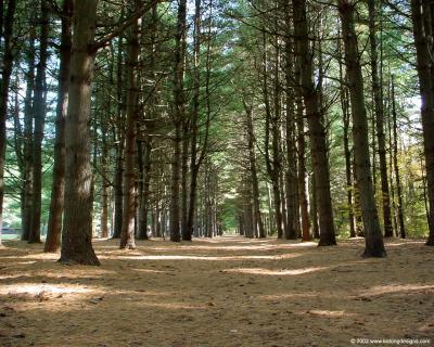 Outdoor / Nature Photographs - Desktop Wallpaper - 1600 x 1200 1280 x 1024 - Kicking Designs ...