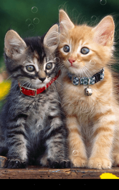 Double Cat Live Wallpaper - Android Apps on Google Play