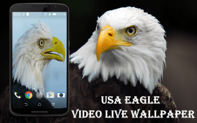USA Eagle Live Wallpaper - Android Apps on Google Play