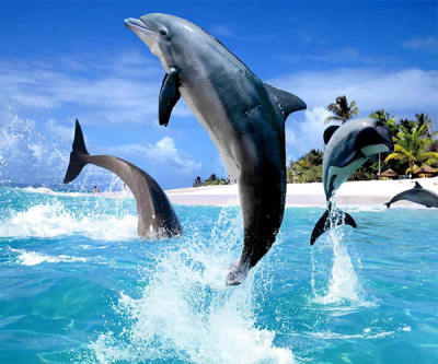 Dolphin Live Wallpaper - Android Apps on Google Play