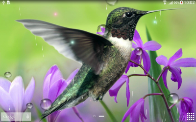 Hummingbirds Live Wallpaper - Android Apps on Google Play