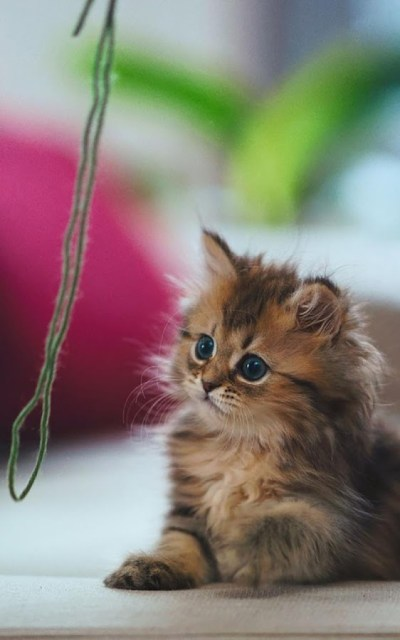 Cat Kittens Live Wallpaper - Android Apps on Google Play