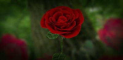 3D Rose Live Wallpaper Free - Apps on Google Play