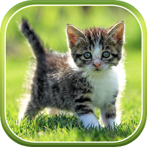 Cat Live Wallpaper - Android Apps on Google Play