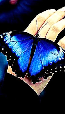 Butterfly Live Wallpaper Android | Cool HD Wallpapers