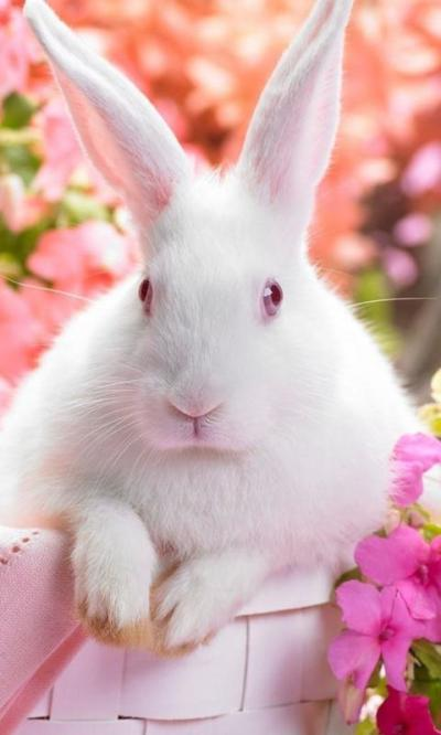 easter bunny live wallpapers - Android Apps on Google Play