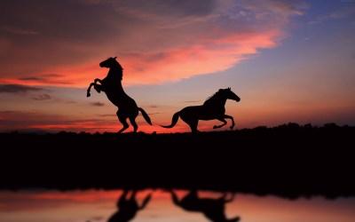 Horse sunset 6K 5760x3600 HD Wallpaper - HDwallpaperspack.in