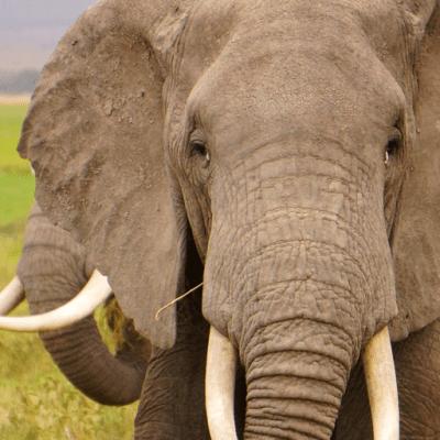Download Funny Elephant Live wallpaper Google Play softwares - aj8uRtGbiAPq | mobile9