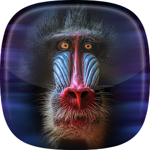 Monkey Live Wallpaper - Android Apps on Google Play