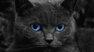 Black Cats Live Wallpaper - Android Apps on Google Play