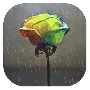 Download Neon Rose Live Wallpaper Google Play softwares - aV7RaUU3729C   mobile9