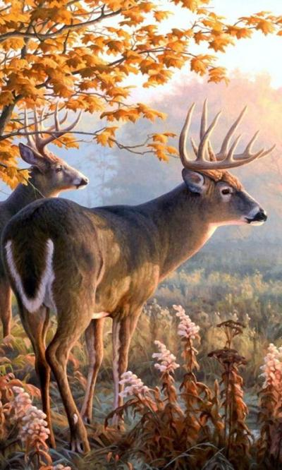live deer wallpapers - Android Apps on Google Play