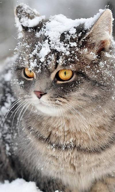 Snow Cats Live Wallpaper - Android Apps on Google Play