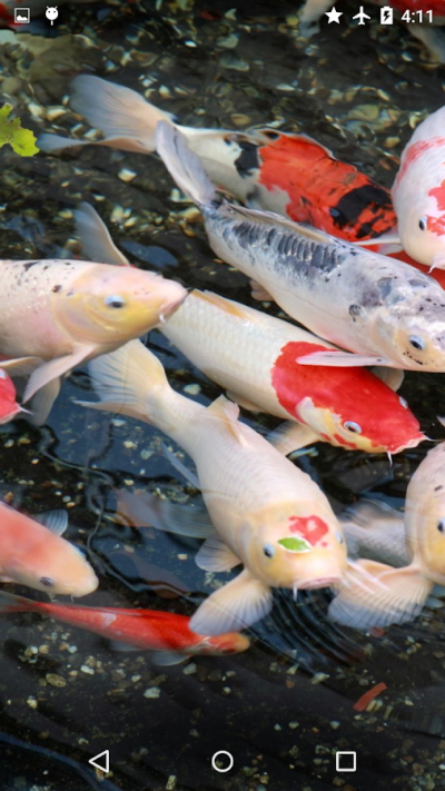 Koi Garden Live Wallpaper - Android Apps on Google Play