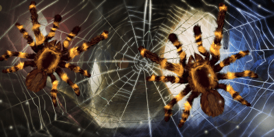 Spider, live wallpaper - Android Apps on Google Play