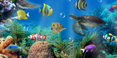 Aquarium live wallpaper - Android Apps on Google Play