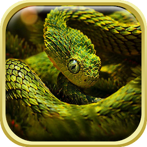 Snake Live Wallpaper HD - Android Apps on Google Play
