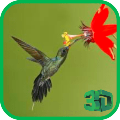 Download Hummingbird live wallpaper Google Play softwares - a7Aum0pQ0lql | mobile9