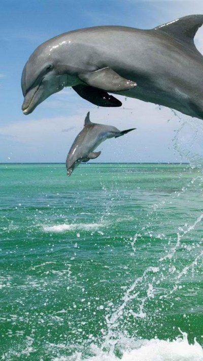 Dolphin Live Wallpaper 🐬 Pictures of Dolphins - Android Apps on Google Play