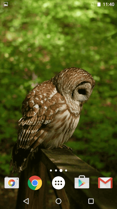 Owl Live Wallpaper - Android Apps on Google Play