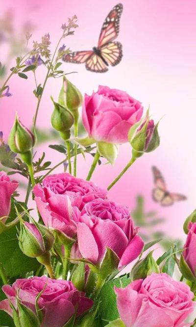 HD Rose Flowers Live Wallpaper - Android Apps on Google Play