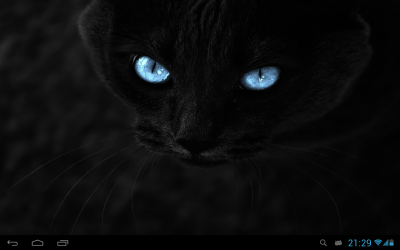 Black cats Live Wallpaper - Android Apps on Google Play