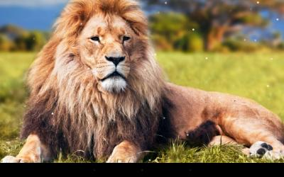Lion Live Wallpaper - Android Apps on Google Play