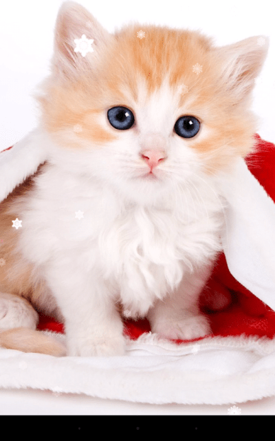 Christmas Cat Live Wallpaper - Android Apps on Google Play