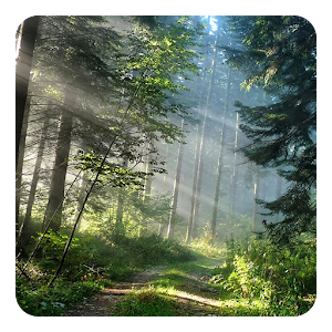 Forest Live Wallpaper - Android Apps on Google Play